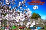 Primavera Cartel
